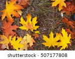 yellow autumn leafs laying on... | Shutterstock . vector #507177808