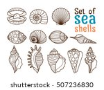 vector sea shell or marine... | Shutterstock .eps vector #507236830