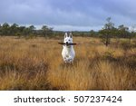 White Shepherd  A Playful Dog...