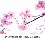 cherry blossome art | Shutterstock . vector #507291058