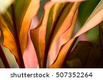 the colourful of leaves in...   Shutterstock . vector #507352264
