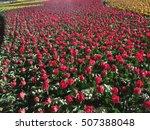 Stock photo rose garden 507388048