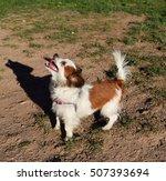 dogs | Shutterstock . vector #507393694