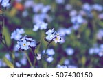 Blue Flowers Forget Me In The...