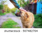 woman hand caresses a dog. dog... | Shutterstock . vector #507482704