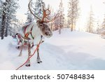 reindeers in a winter forest in ... | Shutterstock . vector #507484834