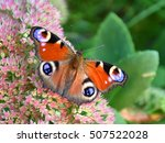 Peacock Butterfly  European...