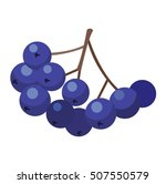 black currant juice stem... | Shutterstock .eps vector #507550579