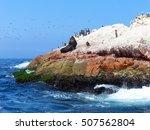 ballestas islands reserve in... | Shutterstock . vector #507562804