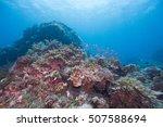 coral | Shutterstock . vector #507588694