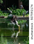 Small photo of Lesser adjutant stork in its habitat, zoo Thailand