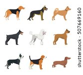 different type of dogs breed... | Shutterstock .eps vector #507669160