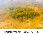 Small photo of Water alga closeup image