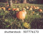 Autumn Apples On The Ground In...