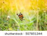 Butterfly On Grass Field With...
