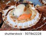 Small photo of Raw queen scallops (lat. Aequipecten opercularis)