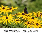 Small photo of Purple Admiral Butterfly
