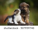 Stock photo cute puppy and kitten on the grass outdoor 507959740