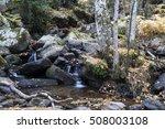 birch forest | Shutterstock . vector #508003108