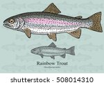 Rainbow Trout. Vector...