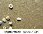 top view sea shell background. | Shutterstock . vector #508014634