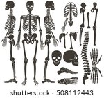 Human Bones Skeleton Dark Blac...