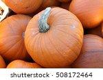 Sugar Pie Pumpkin  Cucurbita...