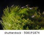 Underwater Landscape. Planted...