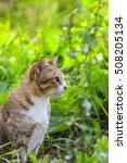 thai cat. | Shutterstock . vector #508205134
