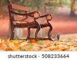 Squirrel Under A Bench In An...