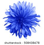 Stock photo blue flower on a white background isolated with clipping path closeup big shaggy flower 508438678
