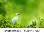 Beautiful Egret Sitting On A...