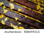 fallen yellow ginkgo leaves on... | Shutterstock . vector #508459213