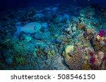 beautiful coral garden in red... | Shutterstock . vector #508546150