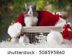 bunny with rabbit  christmas... | Shutterstock . vector #508595860