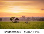 asia farmer in the rice fields... | Shutterstock . vector #508647448