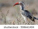 african bird in kruger national ... | Shutterstock . vector #508661404