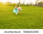 Stock photo running funny dog with toy playing outside crazy happy moments 508681000