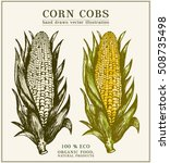corn cobs hand drawn design... | Shutterstock .eps vector #508735498