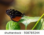 close up of tropical butterfly... | Shutterstock . vector #508785244
