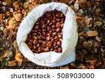 Bag Of Freshly Picked Chestnuts