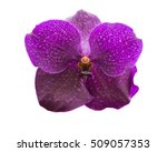 orchid isolated  multiple...   Shutterstock . vector #509057353