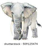 elephant. african animals.... | Shutterstock . vector #509125474