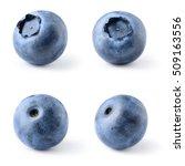 blueberry. bilberry. berries... | Shutterstock . vector #509163556
