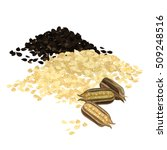 sesame seeds isolated vector... | Shutterstock .eps vector #509248516