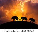 Silhouette Elephants...