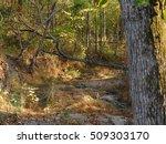tree fallen over creek bed in...   Shutterstock . vector #509303170