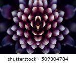 bromeliad flower | Shutterstock . vector #509304784