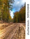 beautiful forest in autumn | Shutterstock . vector #509324848