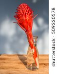 Small photo of Red flowers in vase,(Aechmea fasciata)